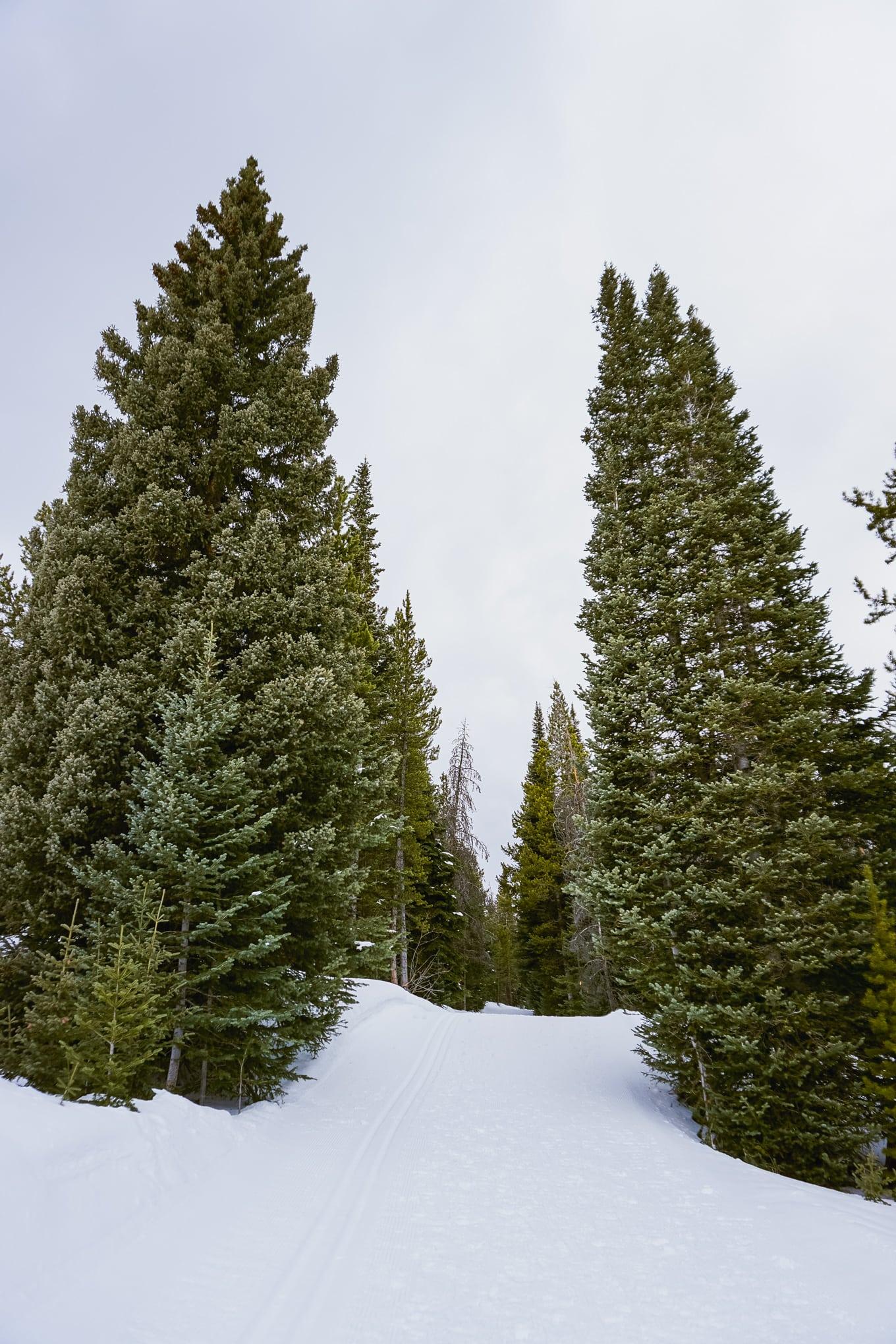 Trees on the most beautiful ski resort