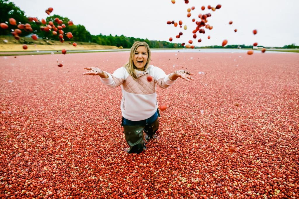 Wisconsin Cranberry Bog
