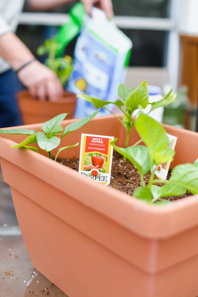 tending to plants in a garden pot