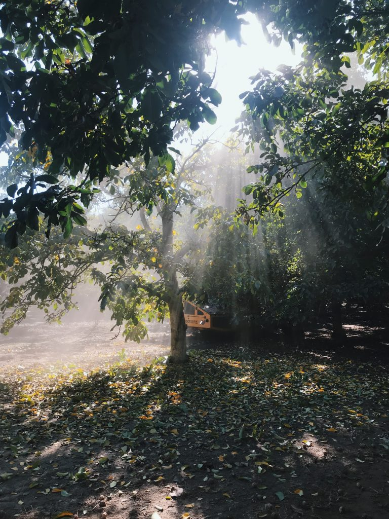 california walnuts trip