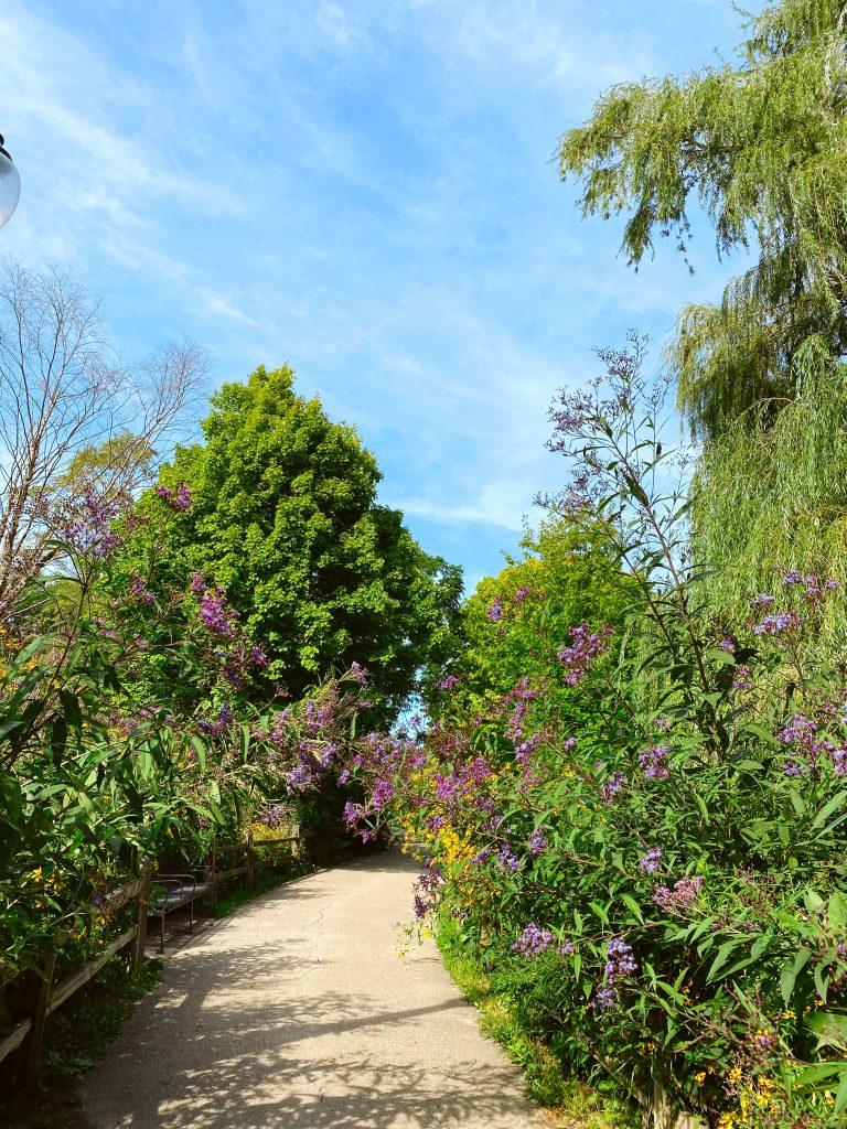 garden for Sunday Spotlights 56